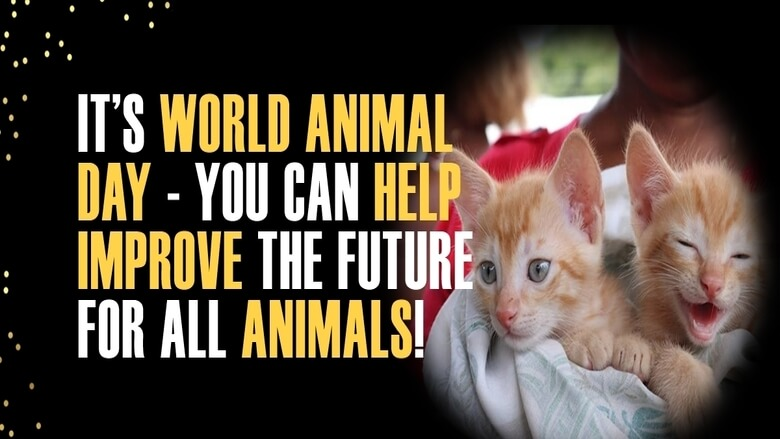 6 Things You can do on World Animal Day